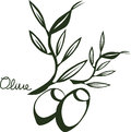Drawing sketch olive vector of tree branch Royalty Free Stock Photography
