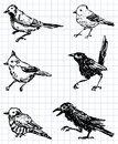 Drawn birds Stock Photography