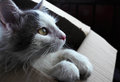 Dream cat Royalty Free Stock Photo
