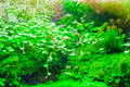 Dream of green alga underwater photography and fish Royalty Free Stock Images