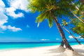 Dream scene beautiful palm tree over white sand beach summer n nature view Stock Image