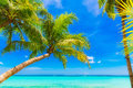 Dream scene. Beautiful palm tree over white sand beach. Summer n Royalty Free Stock Photo