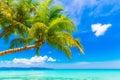Dream scene beautiful palm tree over white sand beach summer n nature view Stock Photography