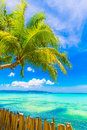Dream scene beautiful palm tree over white sand beach summer n nature view Royalty Free Stock Photos