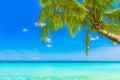 Dream scene beautiful palm tree over white sand beach summer n nature view Stock Photo