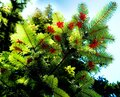 Dreamlike image of blooming fir tree