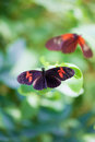 Dreamy Butterflies. Soft painterly nature image of a tropical ga Royalty Free Stock Photo