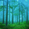Dreamy fantasy color foggy forest background green and blue colored fairytale autumn season landscape Stock Photo