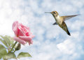 Dreamy image of a Hummingbird hovering Stock Images