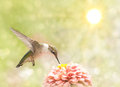 Dreamy image of a Ruby-throated Hummingbird Stock Image