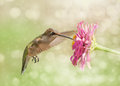 Dreamy image of a Ruby-throated Hummingbird Stock Photography