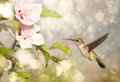 Dreamy image of a Ruby-throated Hummingbird hoveri Royalty Free Stock Images