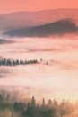 Dreamy misty forest  landscape. Majestic peaks of old trees  cut lighting mist. Deep valley is full of colorful fog Royalty Free Stock Photo