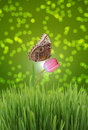 Dreamy nature a blue morpho butterfly sitting on a pink tulip against green bokeh background Royalty Free Stock Photo