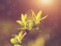 Dreamy photo of fresh green branch in spring Stock Photos