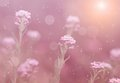 Dreamy photo of wildflower detail Stock Photography