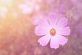 Dreamy purple flower background nature detail Royalty Free Stock Images