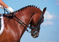 Dressage bay horse portrait of on sky background Stock Photos
