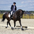 Dressage horse and rider Royalty Free Stock Photos