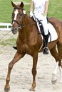 Dressage horse of and rider Royalty Free Stock Photos