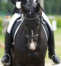 Dressage horse and a rider Stock Image