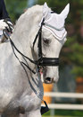 Dressage : verticale de cheval gris Photo stock
