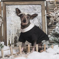 Dressed up Chinese crested dog in a winter scenery Royalty Free Stock Photography