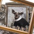 Dressed up Chinese crested dog in a winter scenery with frame Stock Photos