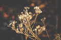Dried antique flower with rustic earthy background white and empty space Stock Photo