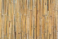 Dried bamboo wall Stock Image