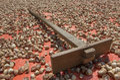 A dried betel nut ans wood harrow. Royalty Free Stock Image