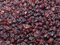 Dried blackcurrant Royalty Free Stock Photo