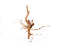 Dried branch on white background Royalty Free Stock Images