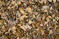 Dried brown autumn leaves Stock Photos