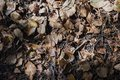 Dried brown leaves covered forest ground under sunlight in autum Royalty Free Stock Photo