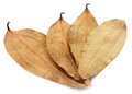 Dried cassia leaf on white Stock Image