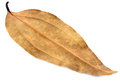 Dried cassia leaf on white Royalty Free Stock Images