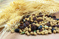 Dried cereal seeds and fruits with stalks of wheat ears Royalty Free Stock Photo