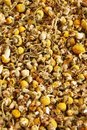 Dried Chamomile Royalty Free Stock Image