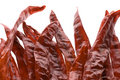 Dried Chillies Isolated Stock Image