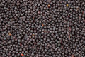 Dried chokeberry grain background Royalty Free Stock Photography