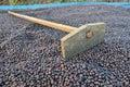 Dried coffee berries and harrow Stock Photography