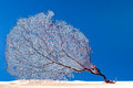 Dried coral reef sea fan on sand. Stock Image