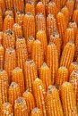Dried corns stack, abstract texture color background. Royalty Free Stock Photo