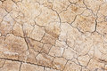 Dried crack land close up Royalty Free Stock Photos