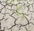 Dried earth at the river Royalty Free Stock Photo