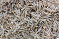 Dried fish in thailand preservation to be stored for a long time Stock Image