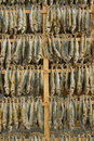 Dried fishes Royalty Free Stock Image
