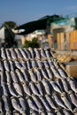 Dried fishes in Cheung Chau Stock Image