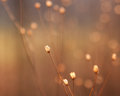Dried flower buds of weed in sunshine Royalty Free Stock Photo